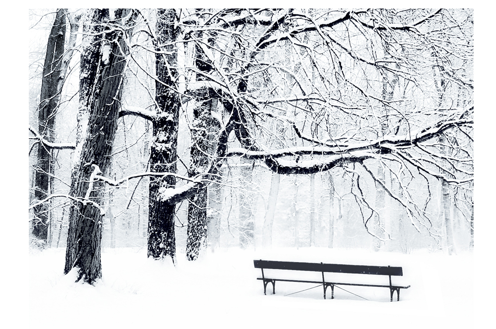 Winter solitude by Julia Dunin-Brzezinska +